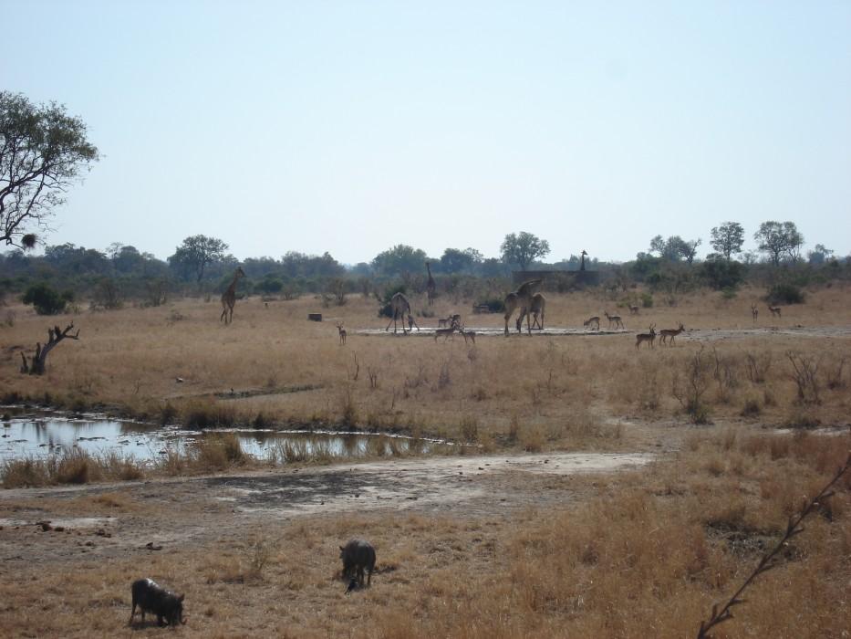 Wasserloch im Krüger Nationalpark