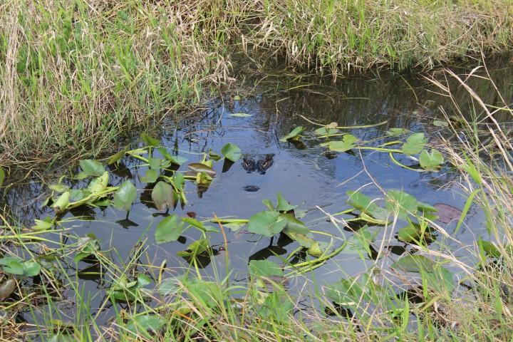 Everglades National Park – Florida