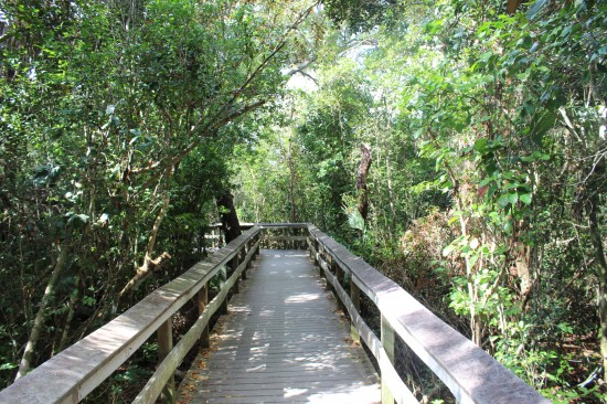Longe Pine Key Trail