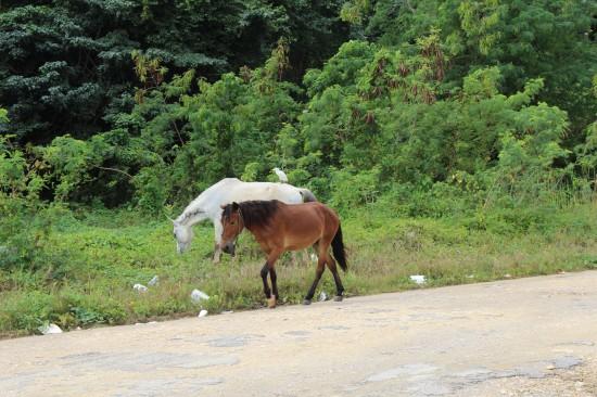 Meine Pferde auf Samana