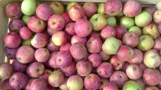 knackige Äpfel
