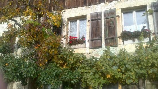 Fenster mit Blumen