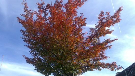 Grün-Roter Baum