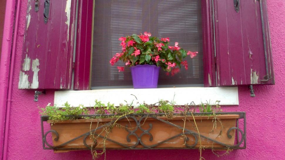 Farbiges Fenster mit Blume in Burano