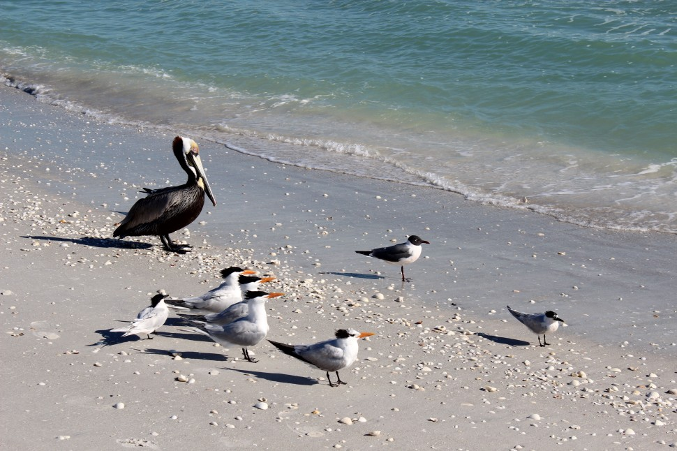 Sanibel Island Birds