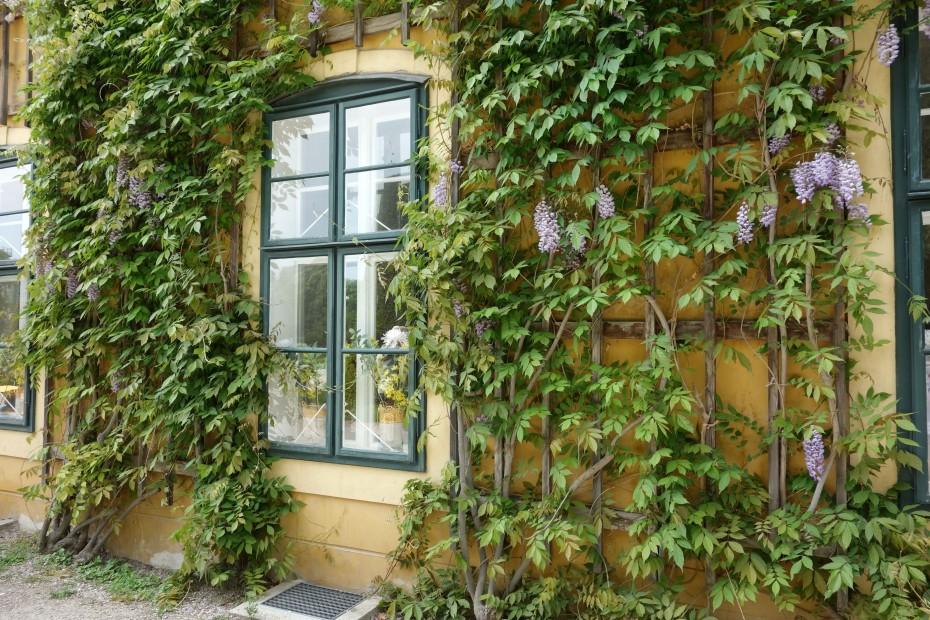 Fenster_mit_Blumen