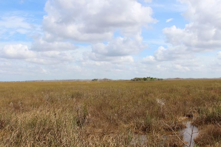 Horizont Everglades