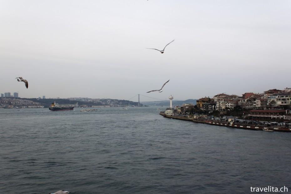 Voegel-Bosporus-Istanbul
