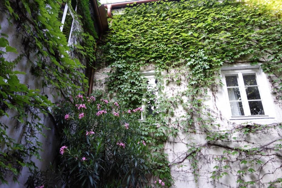Nikolaihof_Garten