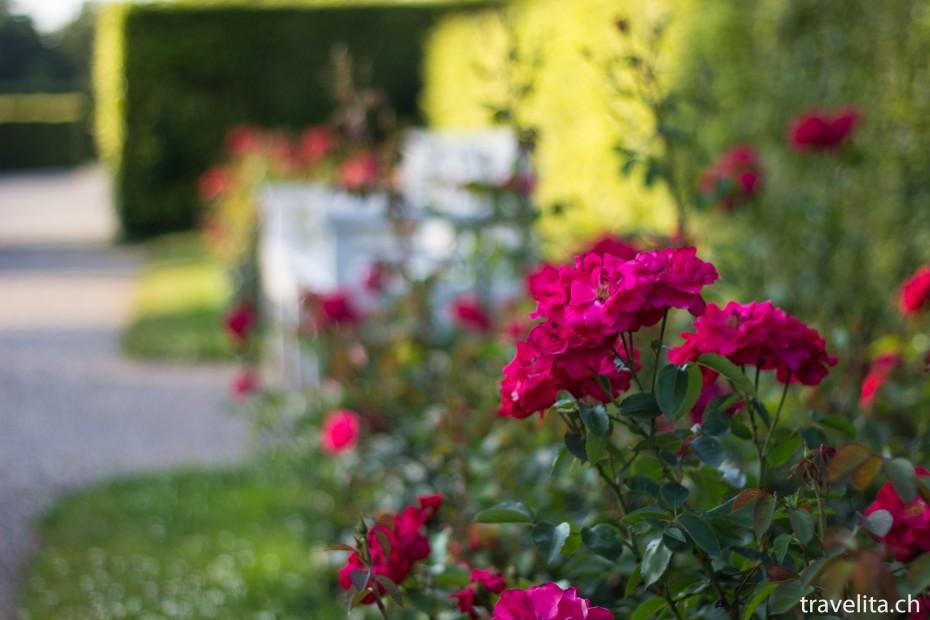 rosen-garten-rot
