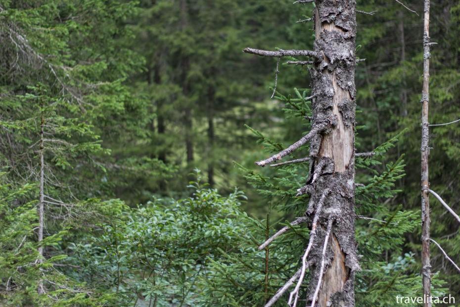 Lenk_Natur