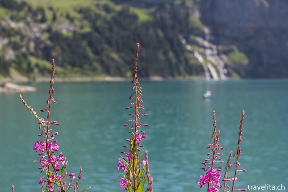 Blumen vor dem Oeschinensee