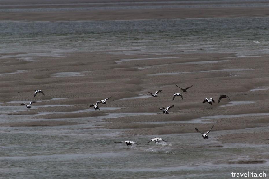 Wattenmeer_Vögel