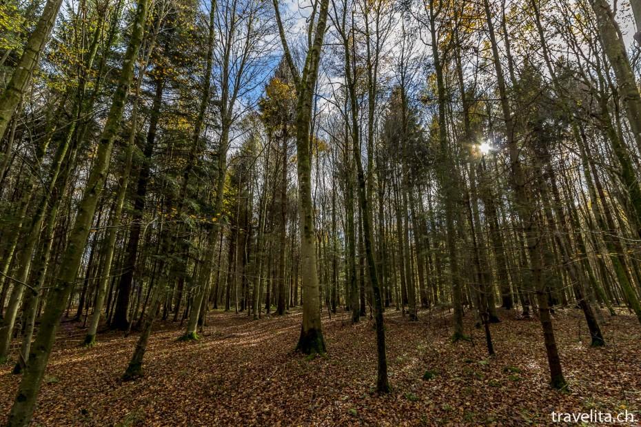 Wildnispark-Sihlwald-2