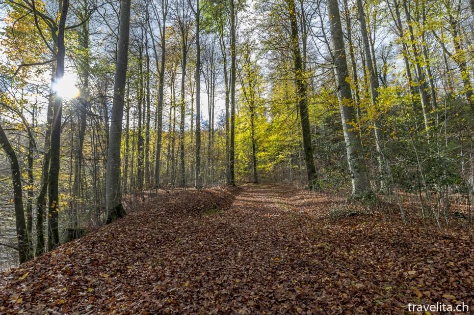 Wildnispark-Sihlwald-4