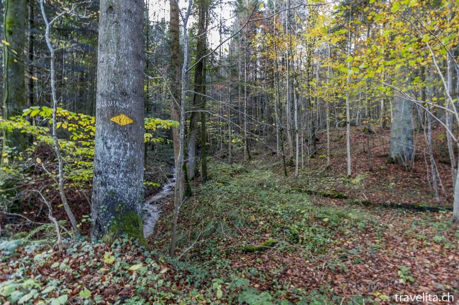 Wildnispark-Sihlwald