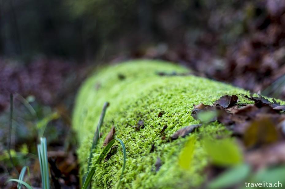 Wildnispark-Sihlwald-Herbst-2