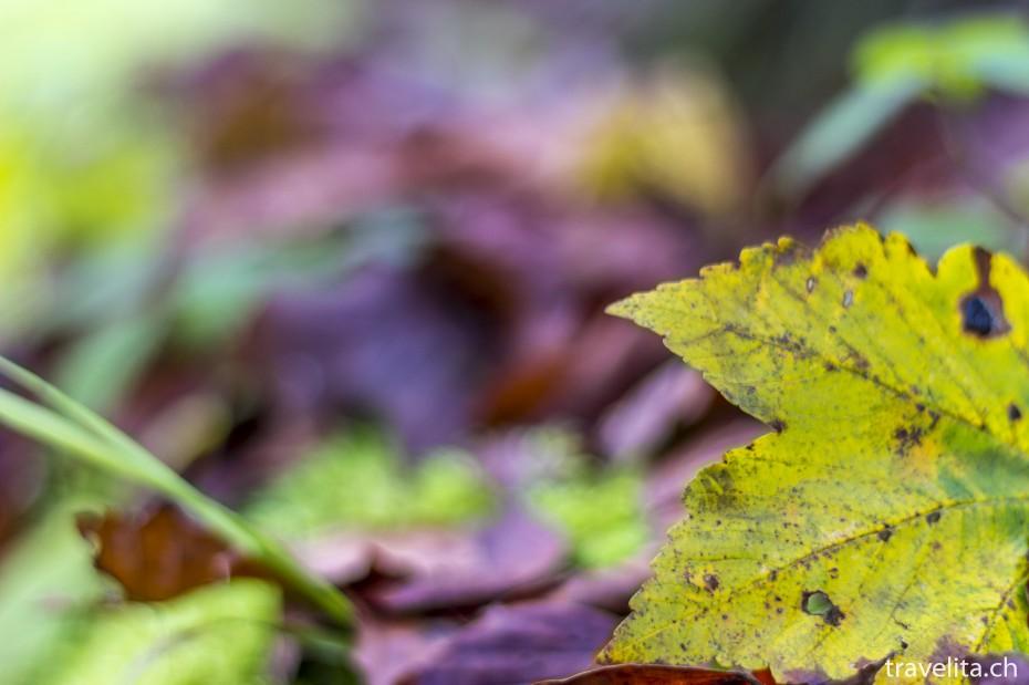 Wildnispark-Sihlwald-Herbst-3