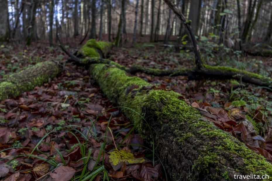 Wildnispark-Sihlwald-Herbst