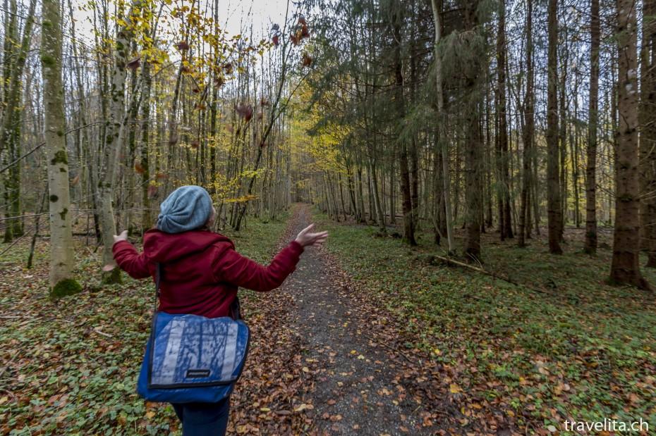 Wildnispark-Sihlwald-Herbstfun