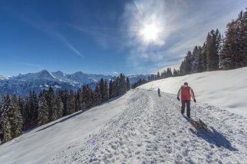 Niederhorn - Schlittenwandern mit Panorama