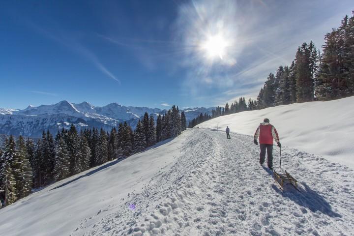 Niederhorn – Schlittenwandern mit Panorama