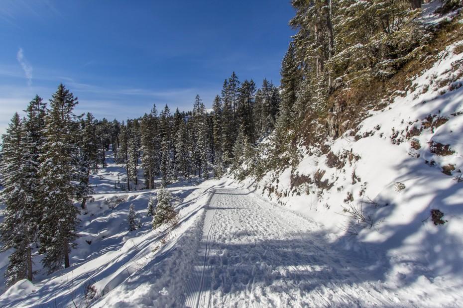 Schlittelweg Waldegg