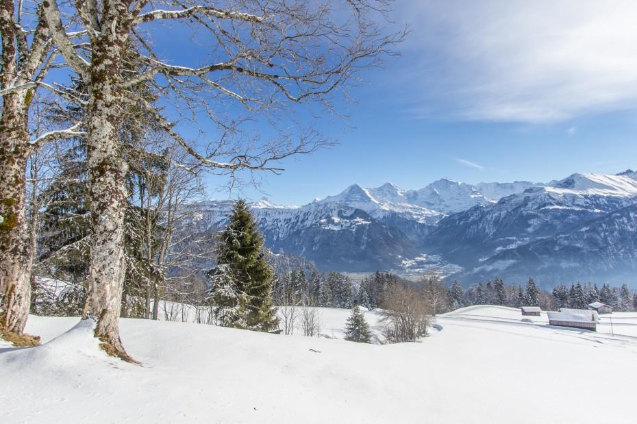 Winterpanorama Eiger Moench Jungfrau