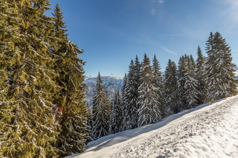 Berner Oberland Winterlandschaft