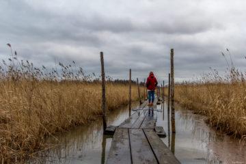 Im Sumpf - Ausflug zu den Wurzeln von Helsinki