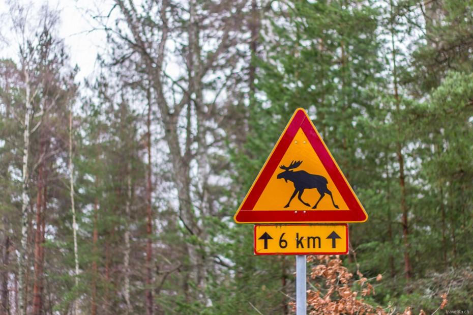 Turku-Ruissalo-3