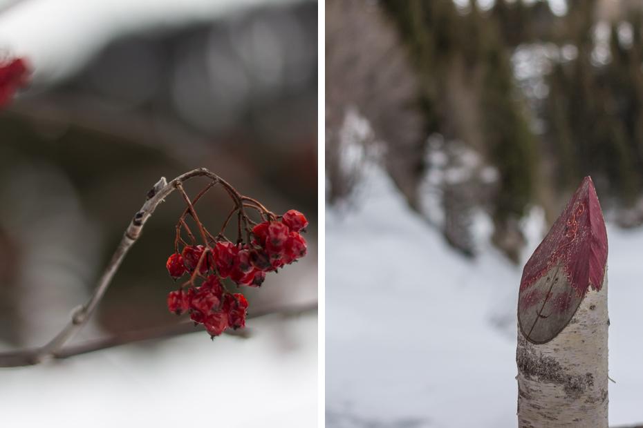 Villars-Schneeschutour-3