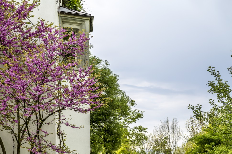 Schloss-Wartegg-Park-4