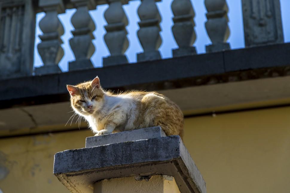 Comersee-Castelo-di-Vezio-Katze