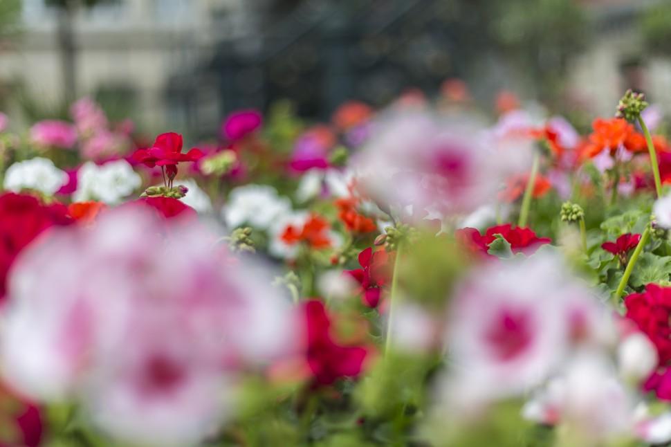 Gent-Blumenmarkt-Kouter-10
