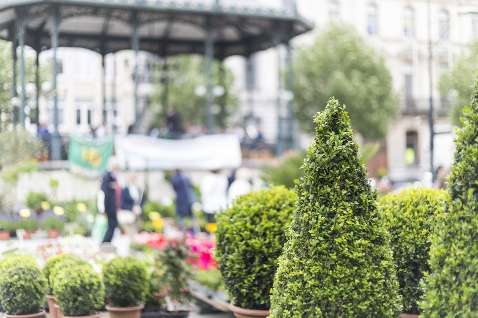 Gent-Blumenmarkt-Kouter-4