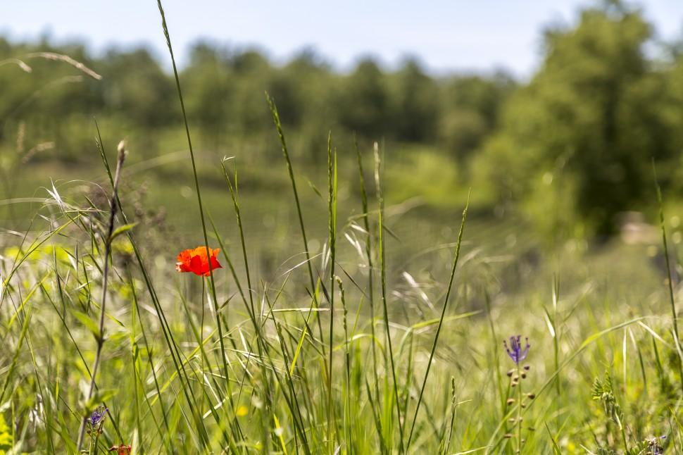 Toskana-Chianti-Blumen