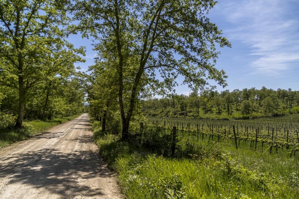 Toskana-Chianti-Radweg