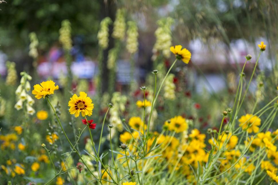 antwerpen-Blumen