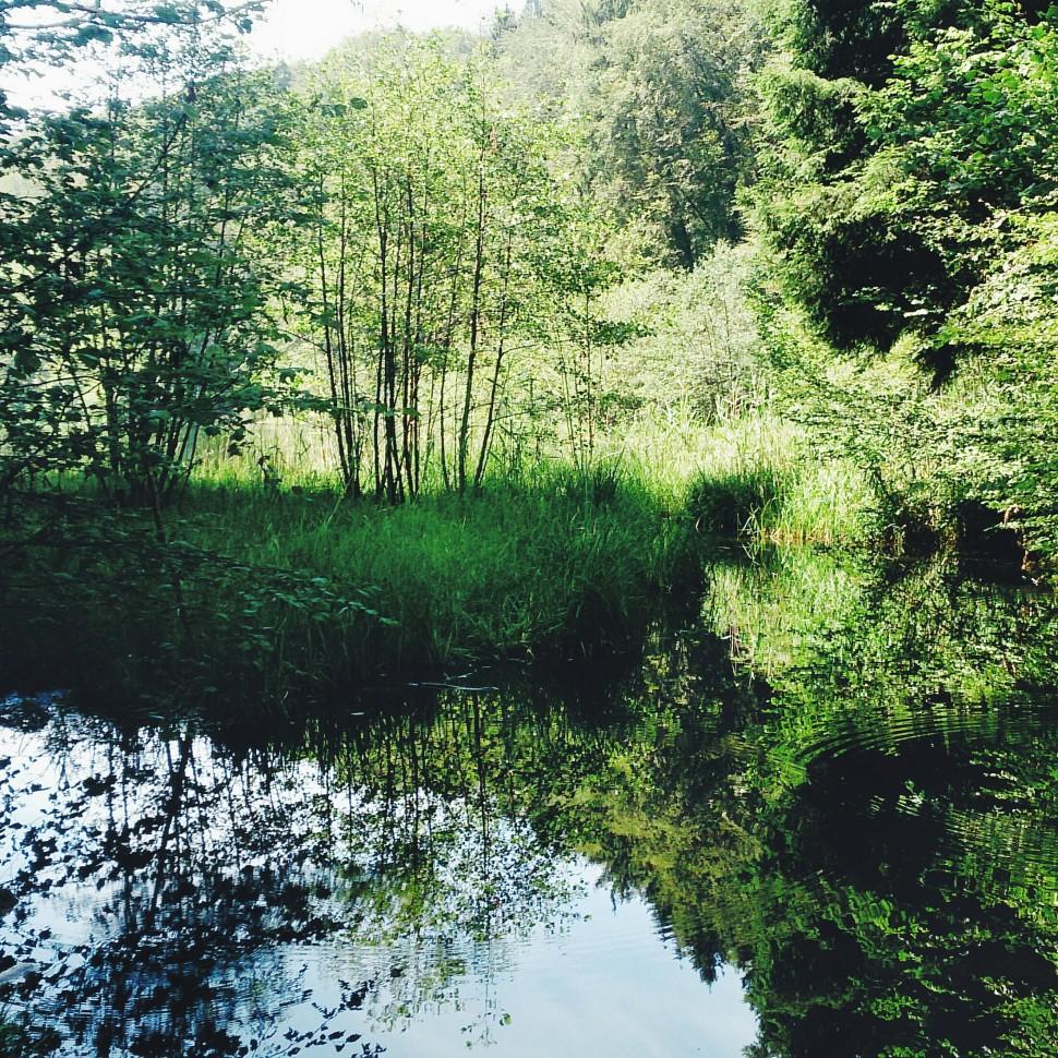 Naturschutzgebiet-Egelsee