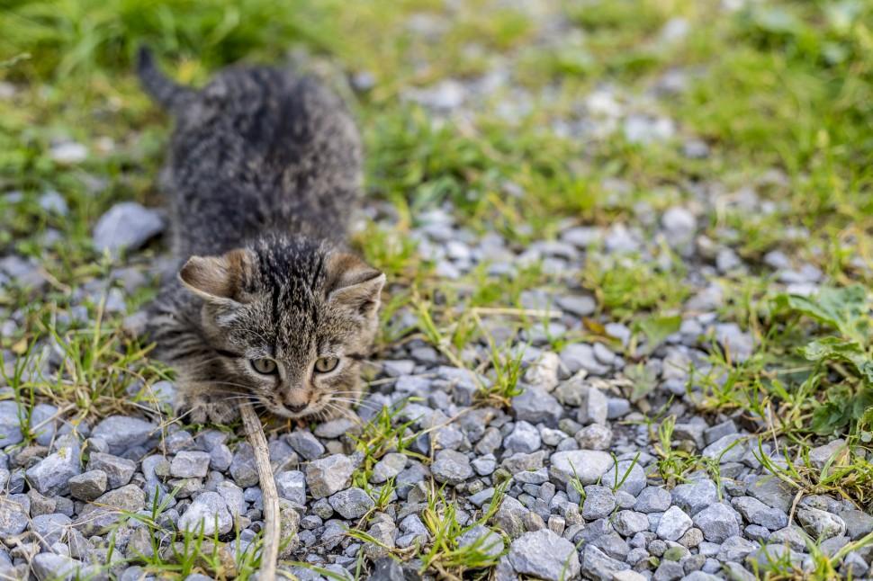 appenzell-Seealp-Katze
