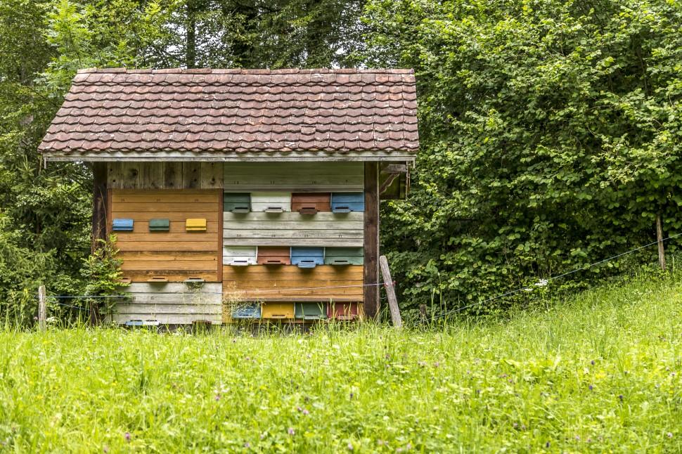 Bienenhaus