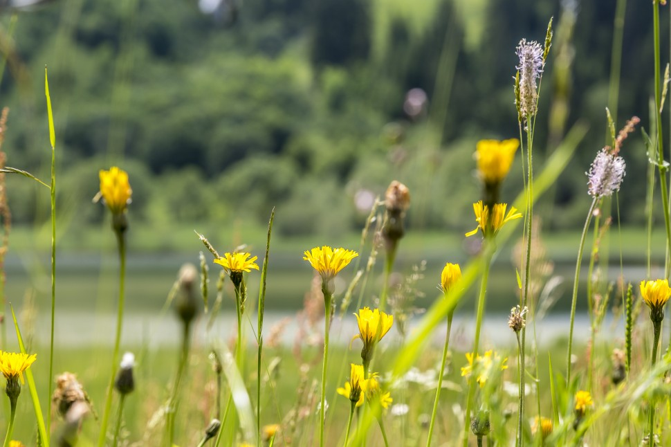 gstaad-Lauenensee-Natur