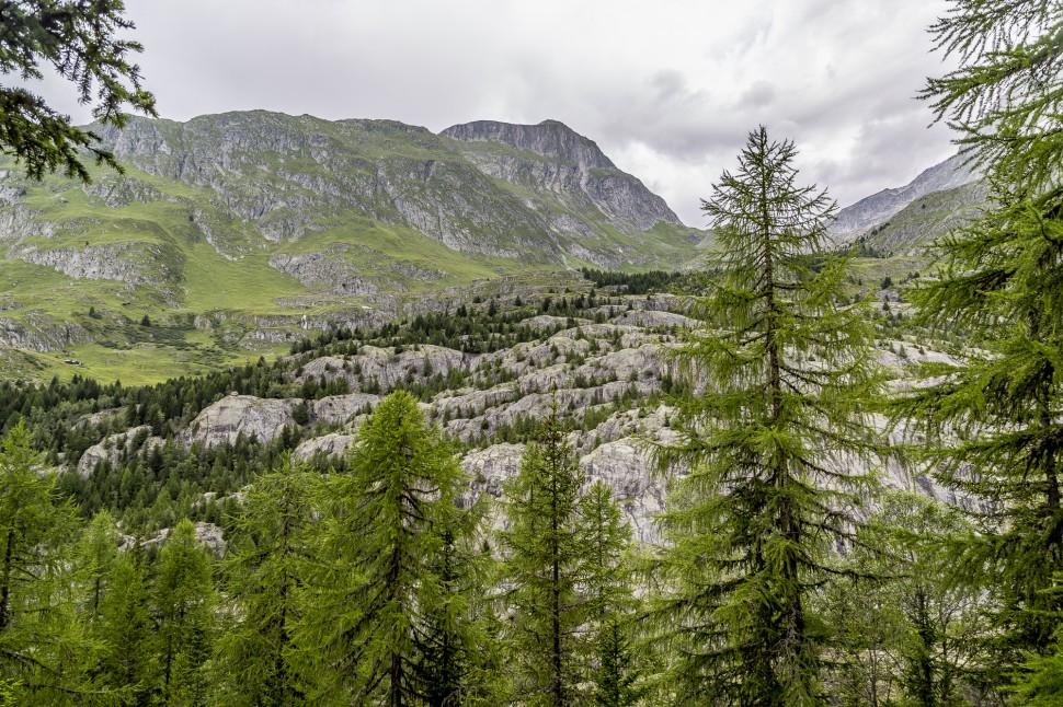 Aletschgletscher-Moräne