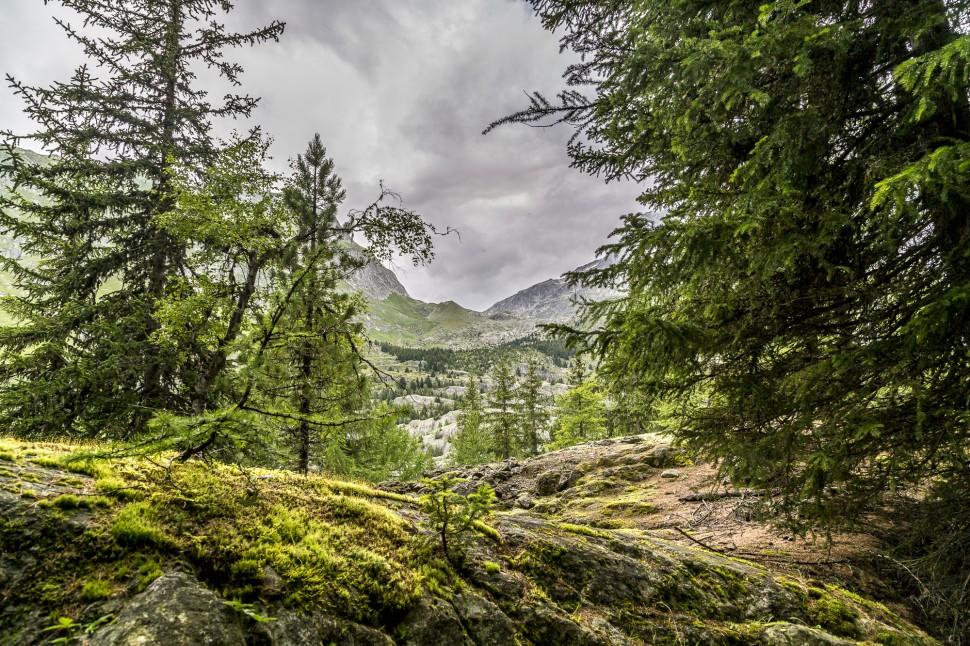 Aletschwald-Teiffe-Wald