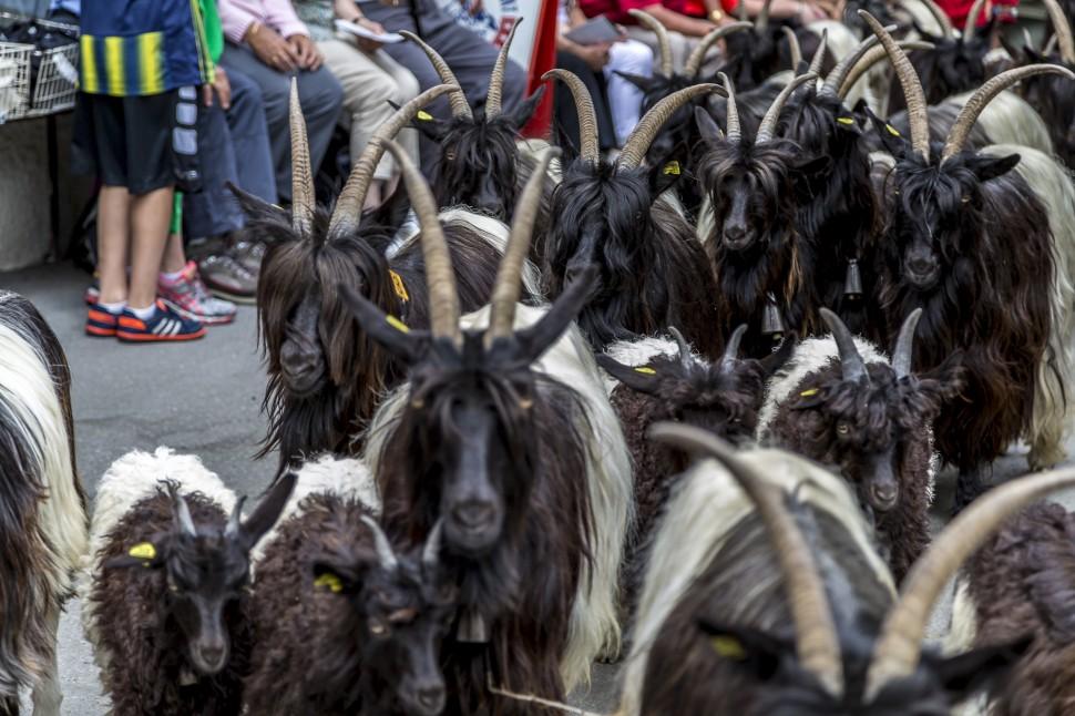SwissFoodFestival-Zeramtt-Folkloreumzug