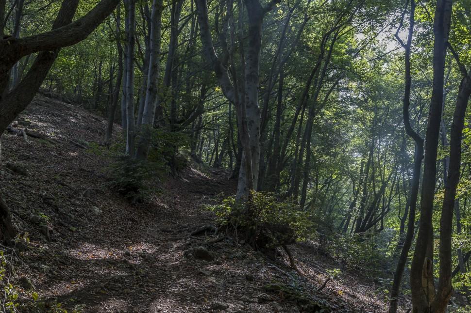 Monte-San-Giorgio-6