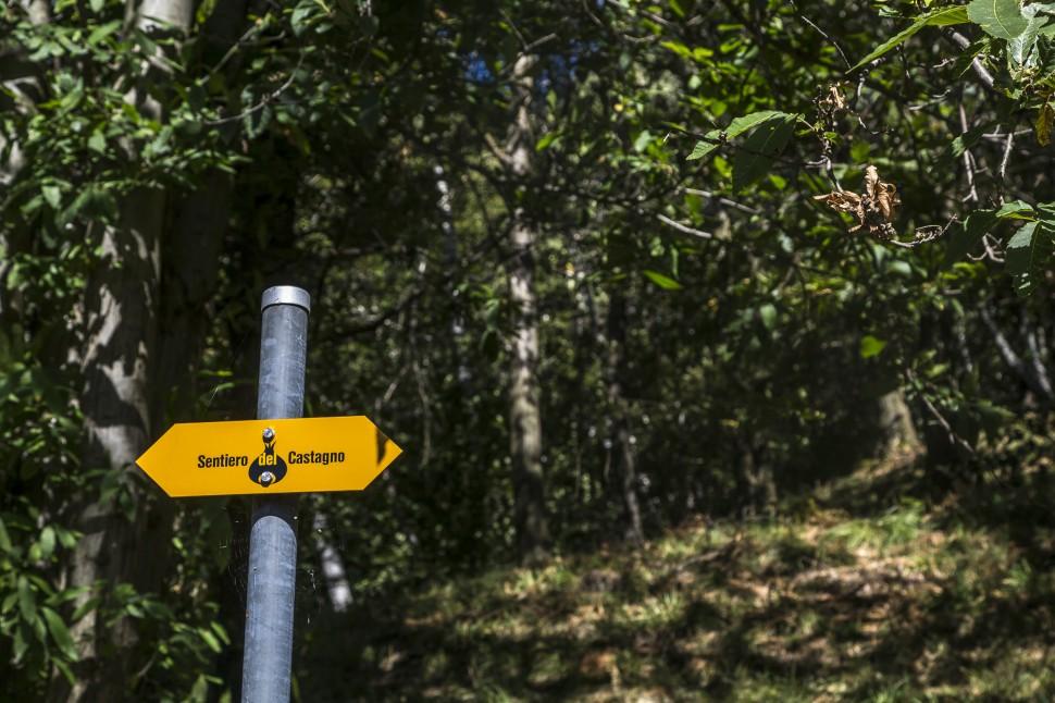 Sentiero-del-Castagno