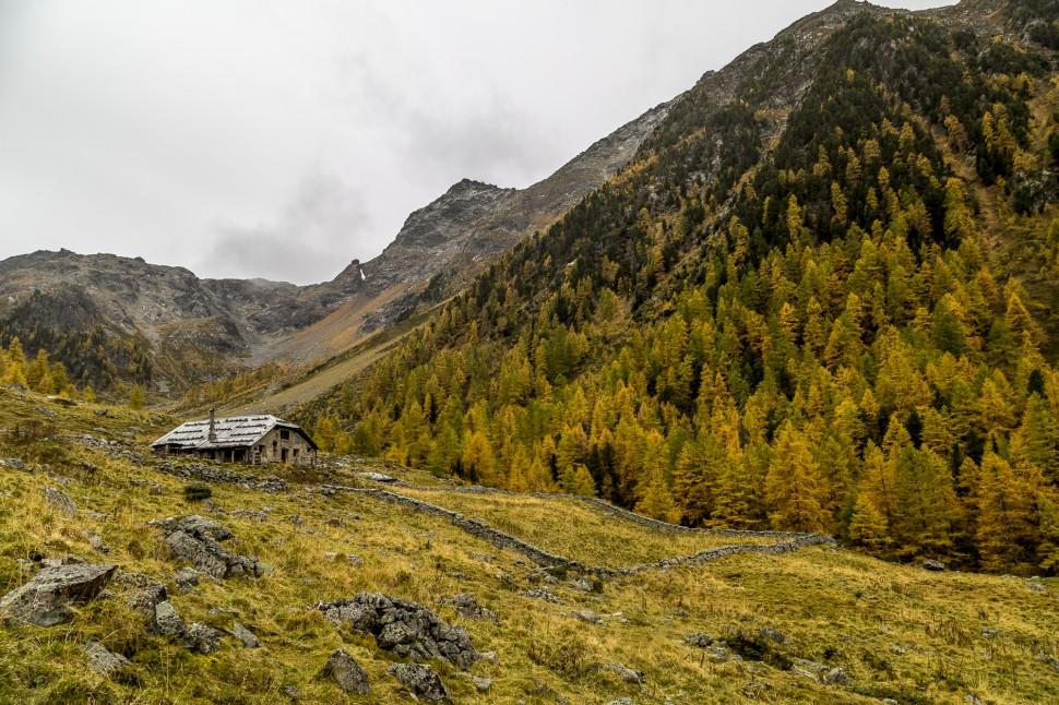 Alp-Zeznina-Dadaint