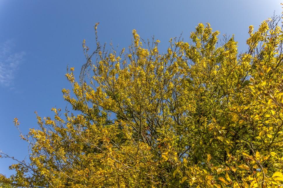 Arboretum-aubonne-2